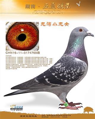 2016年温州龙湾联盟国际四关鸽王19名