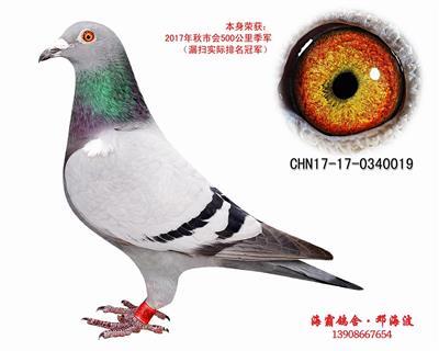 CHN17-17-0340019