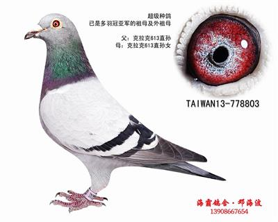 T13-778803