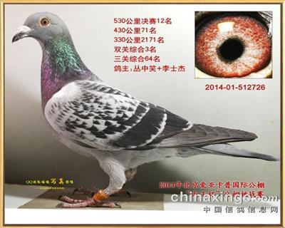 14年北京爱亚卡普鸽王3名