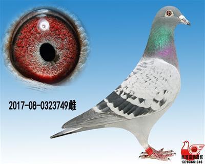 【凡龙超级73极品雌】749