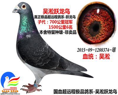 吴淞跃龙鸟