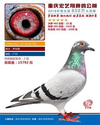 重庆宏艺翔赛鸽公棚决赛23名