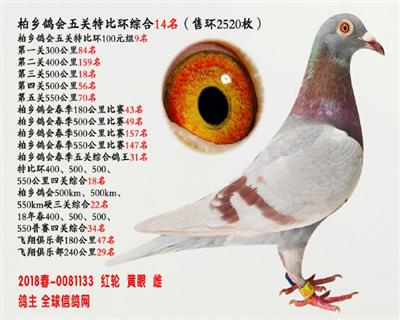 五关鸽王14名