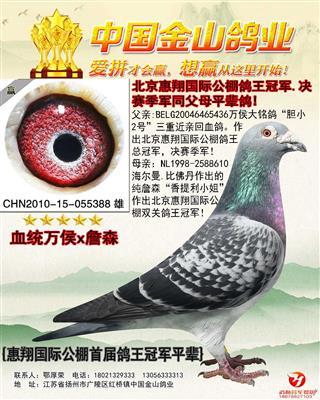 北京北惠翔国际公棚首届鸽王冠军平辈鸽!