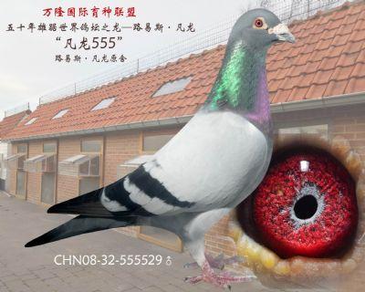 凡龙555