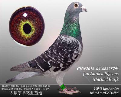 杨阿腾多利号1雌