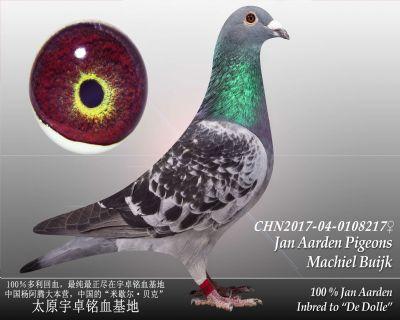 杨阿腾多利号2雌