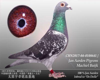 杨阿腾多利号9雄