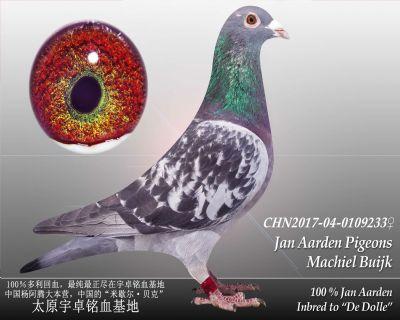 杨阿腾多利号10雌