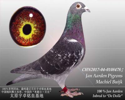 杨阿腾多利号14雄(已售)