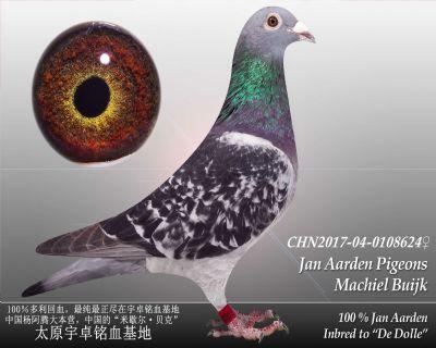 杨阿腾多利号17雌