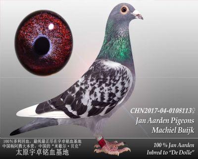 杨阿腾多利号18雌