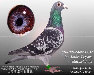 杨阿腾多利号19雄