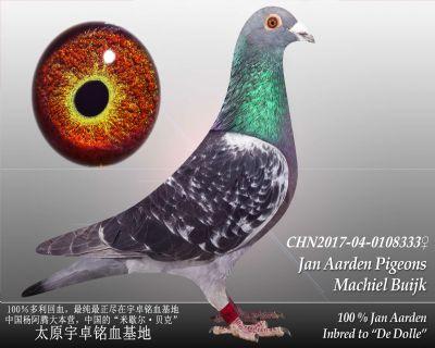 杨阿腾多利号24雌