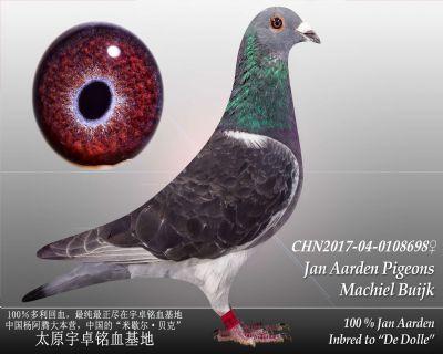 杨阿腾多利号42雌