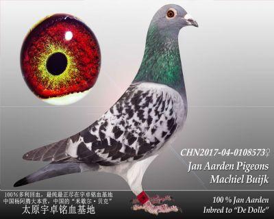 杨阿腾多利号58雌
