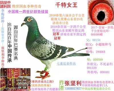 中国坚利鸽道