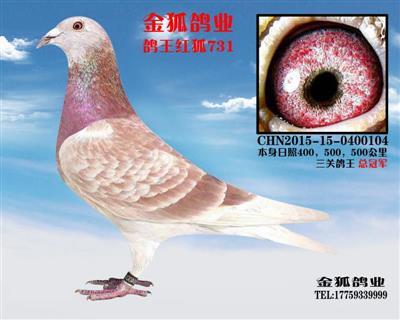 三关总冠军红狐731