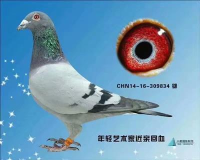 胡本834