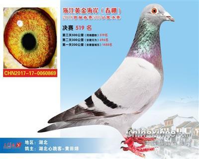 上海黄金海岸春棚决赛519名