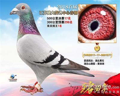 江苏健大赛鸽中心春决赛17名、双关鸽王七