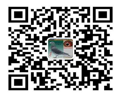 王牌赛鸽联盟微信号-二维码