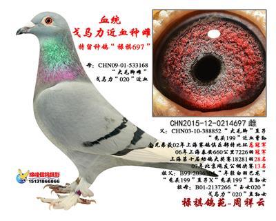 """戈马利""""禄祺697"""""""