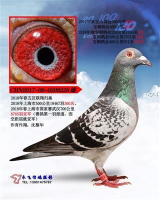 超级鸽-武汉国家赛总亚军