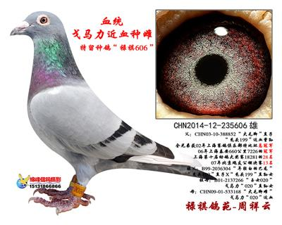 """戈马利""""禄祺606"""""""