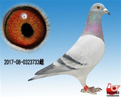 【胡本极品种雌】733