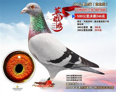 天津浩翔公棚决赛246名