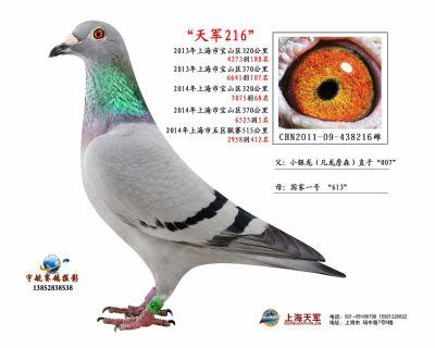 2011-09-438216雌