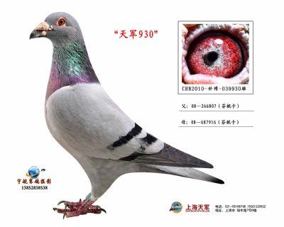 2010-世博-399930雄