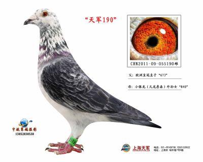 2011-09-055190雌