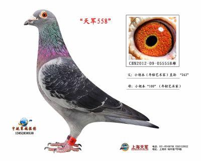 2012-09-055558雄