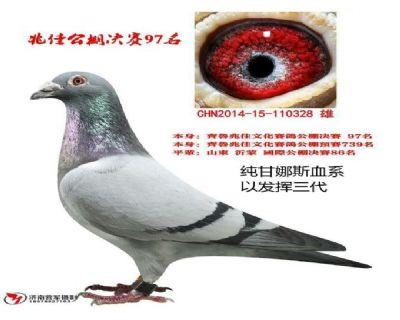 金牛328