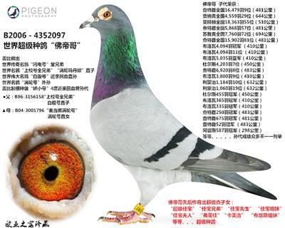 """佛帝哥(Vertigo)-又名""""眩晕号"""""""