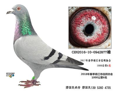 杨龚多拉斯877