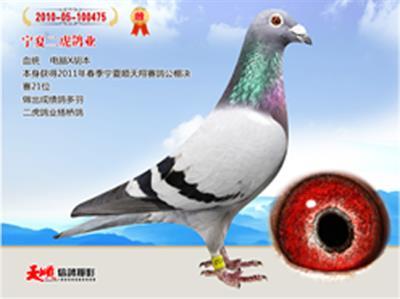 天顺艺博文化传媒公司
