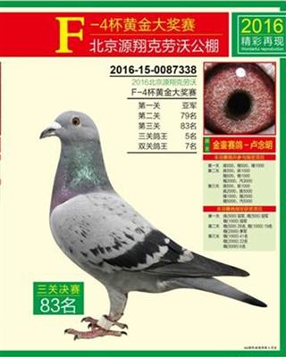 2016秋北京源翔克劳沃公棚鸽王