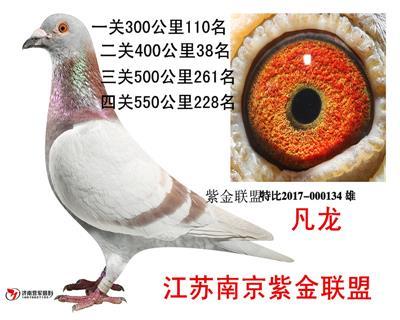 南京联盟134