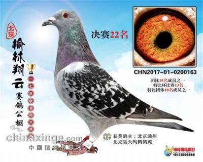 2017年北京榆林翔云赛鸽公棚决赛22名