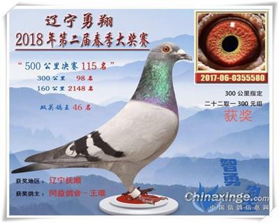 2018年丹东勇翔公棚决赛115名
