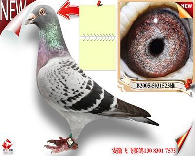 桑杰士-最后的鸽王