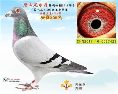中国天一系获奖鸽