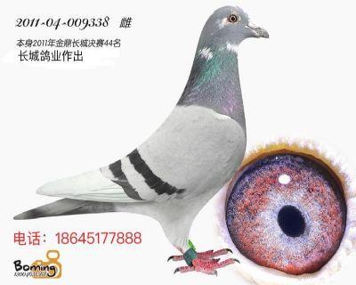 金鼎长城决赛44位