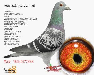 龙翔轩8854