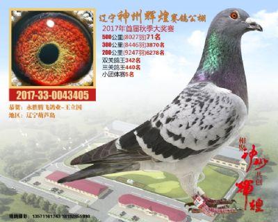 神州辉煌71