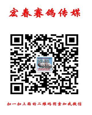 宏春赛鸽传媒微信号